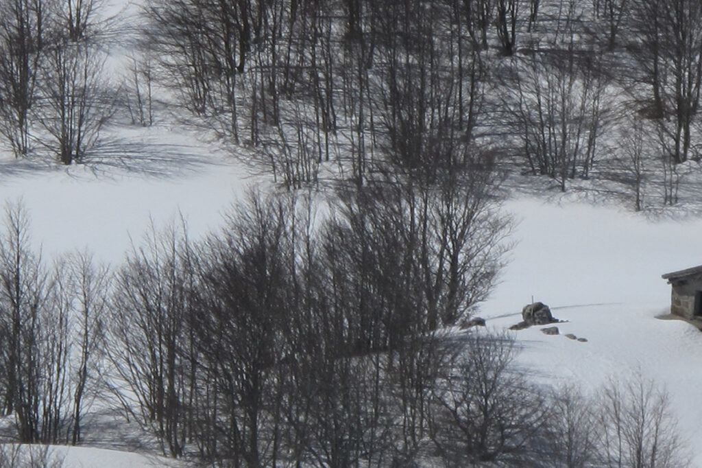contacto-prado-nevado